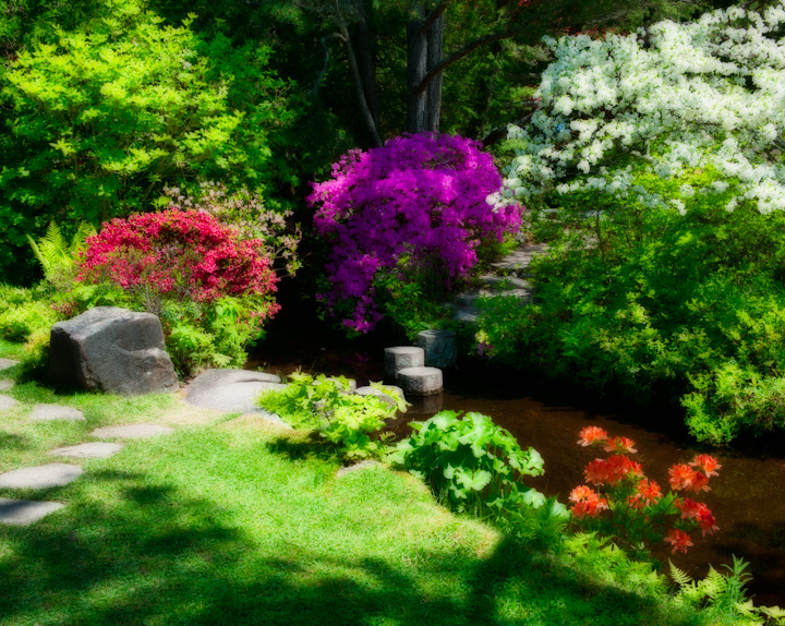 Asticou Azalea Garden in Bloom: Northeast Harbor, ME